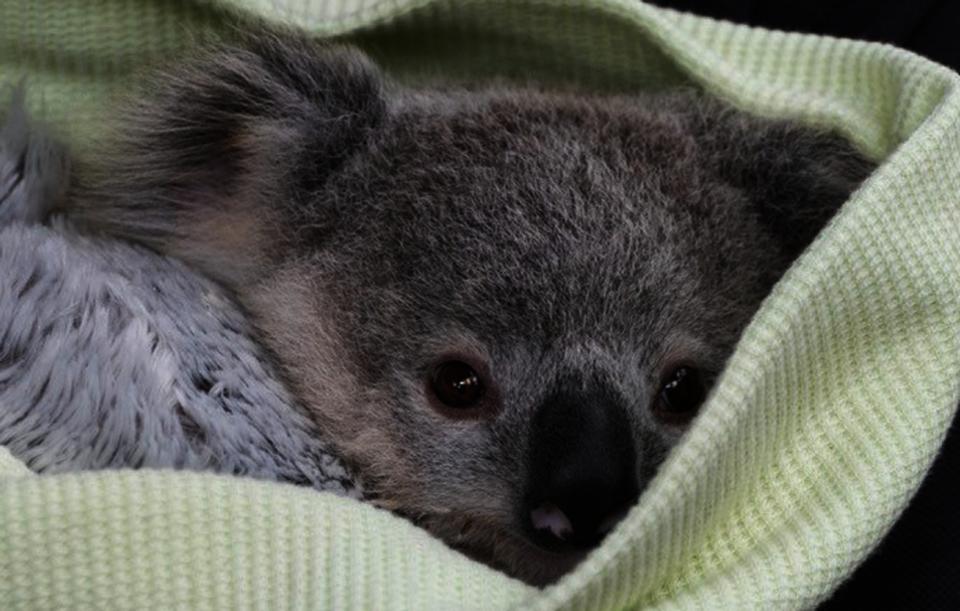 Aussie Wildlife Recovery & Emergency Preparedness