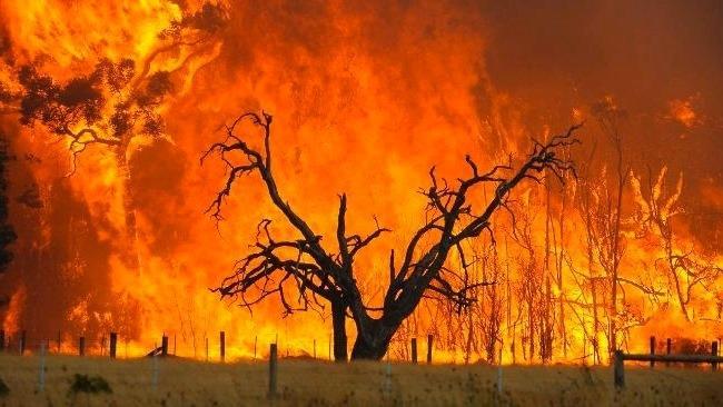 Australia Bushfire Relief: Nappies for Children