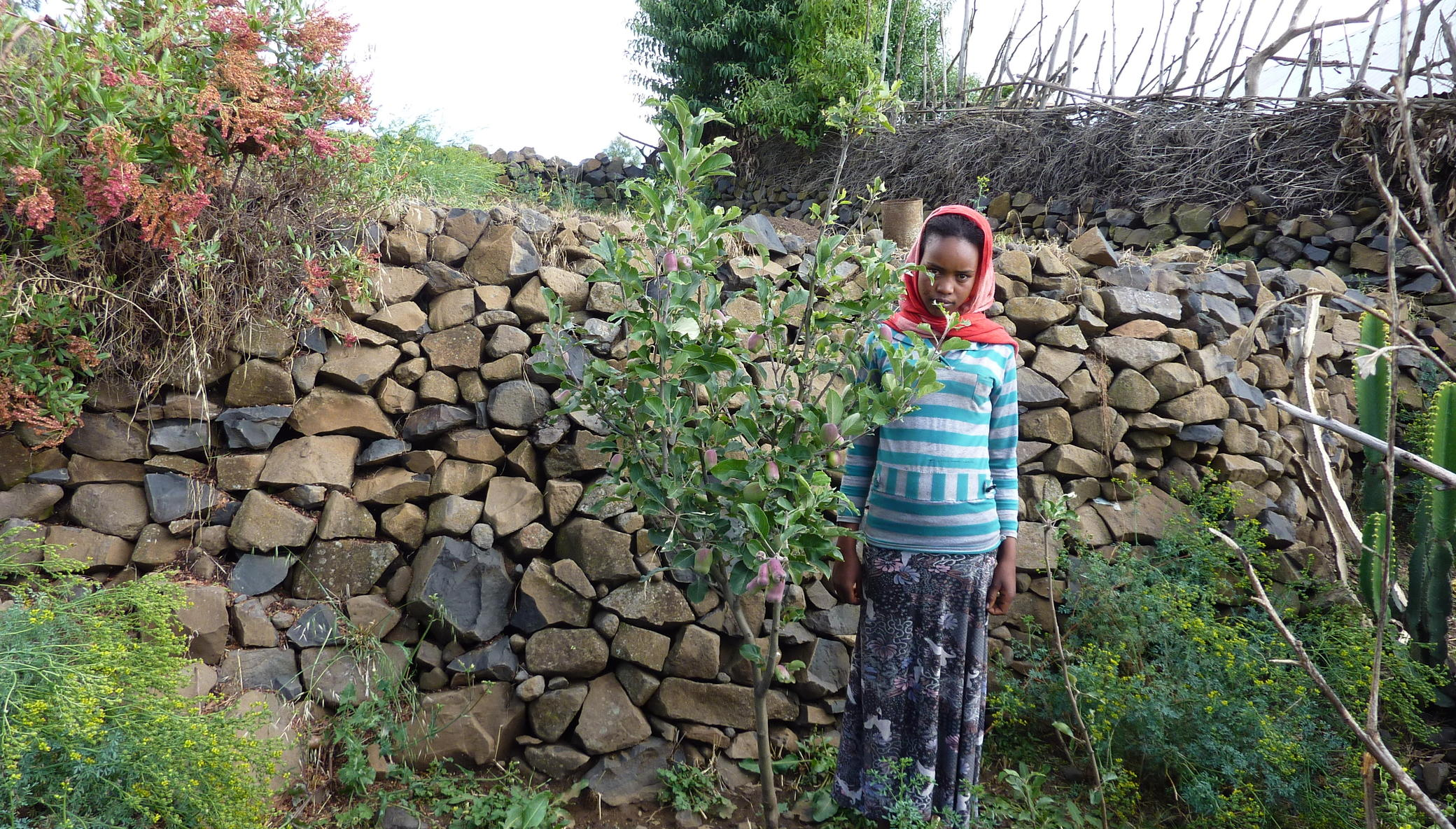Build victory gardens for 500 Ethiopian households