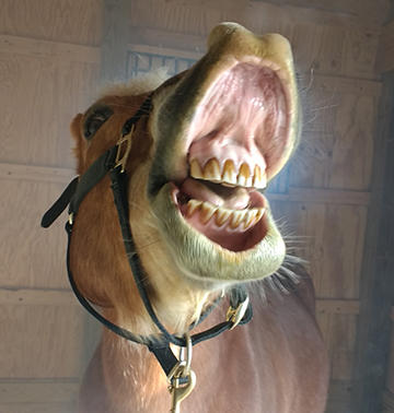 Can You Make A Horse Smile? You Bet! Here's How...