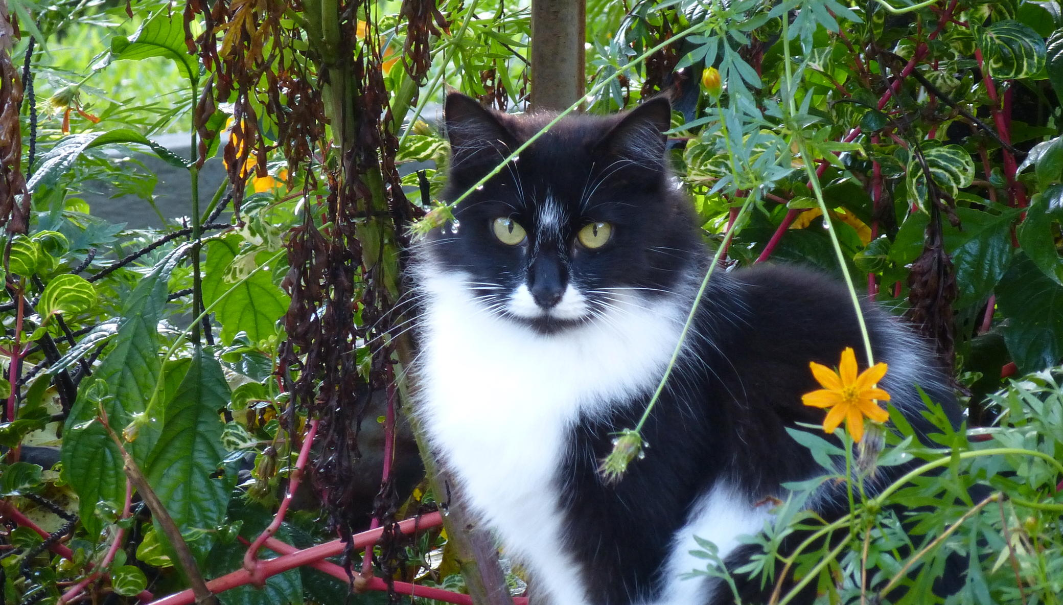 Caring for Cats: Neutering, Food and Shelter