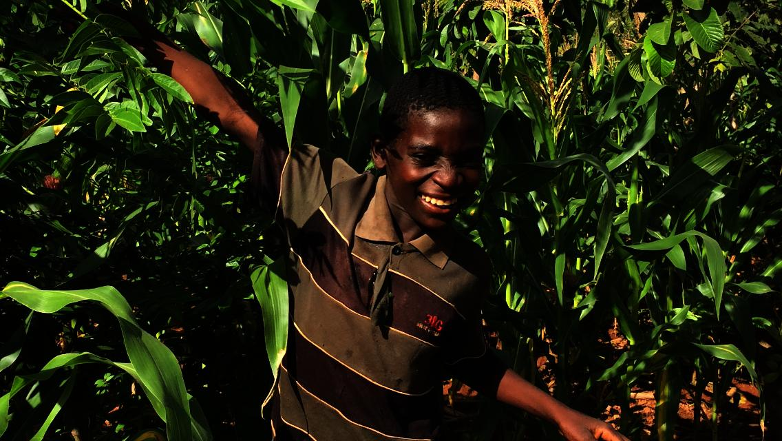 Empower 30 Malawian Families with Solar Irrigation