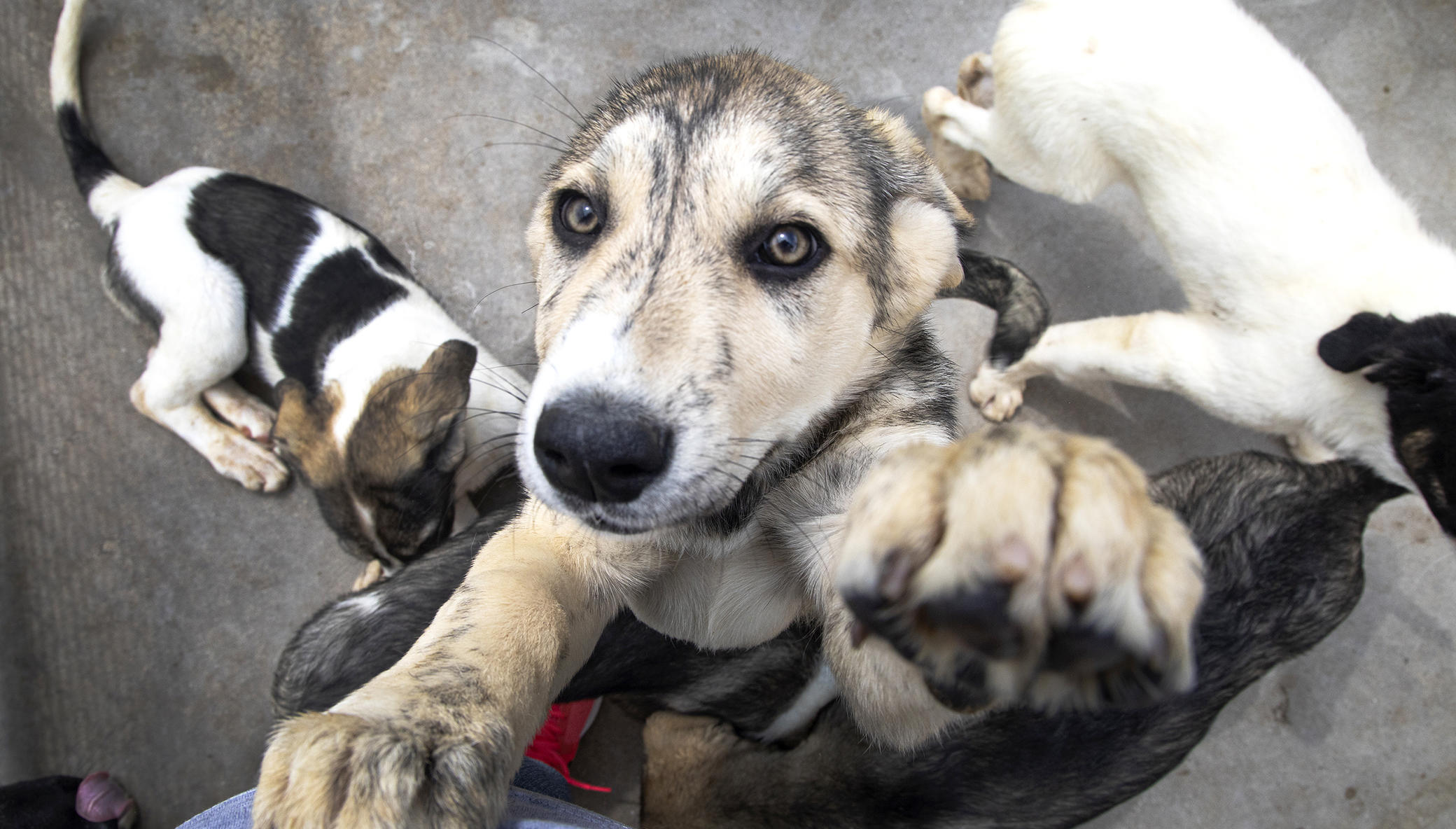 Franzisca Vet Clinic - Help us Help Them