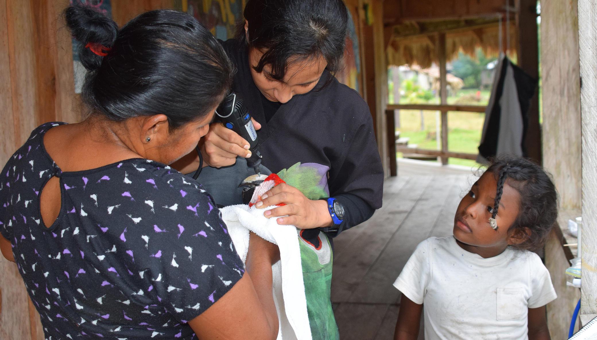 Fund 16 Honduran Women Saving Endangered Parrots