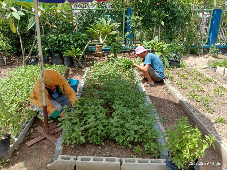 Garden to Market- Helping the poor to grow food!