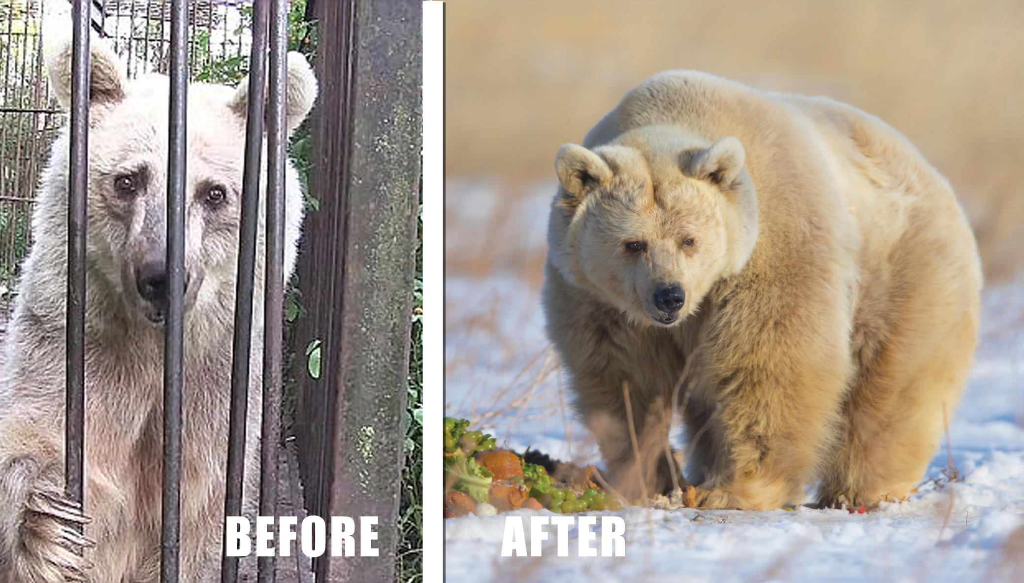 Help Over 520 Rescued Lions, Tigers, & Bears