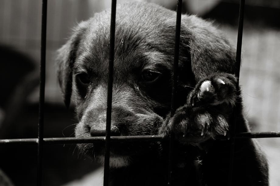 Help Put an End to Puppy Mills in Canada