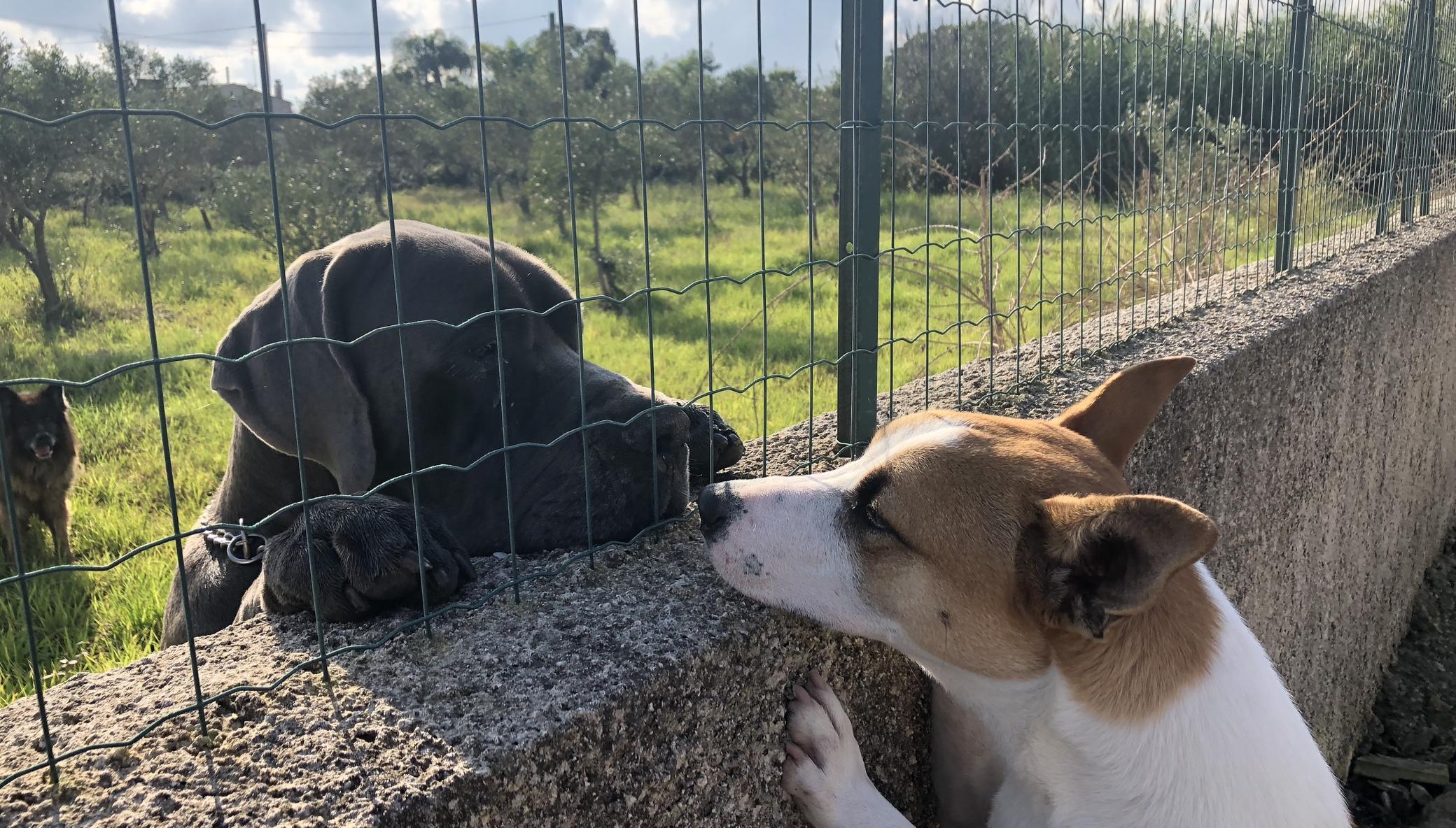 Help us Create an Elderly Dog Shelter - Sicily