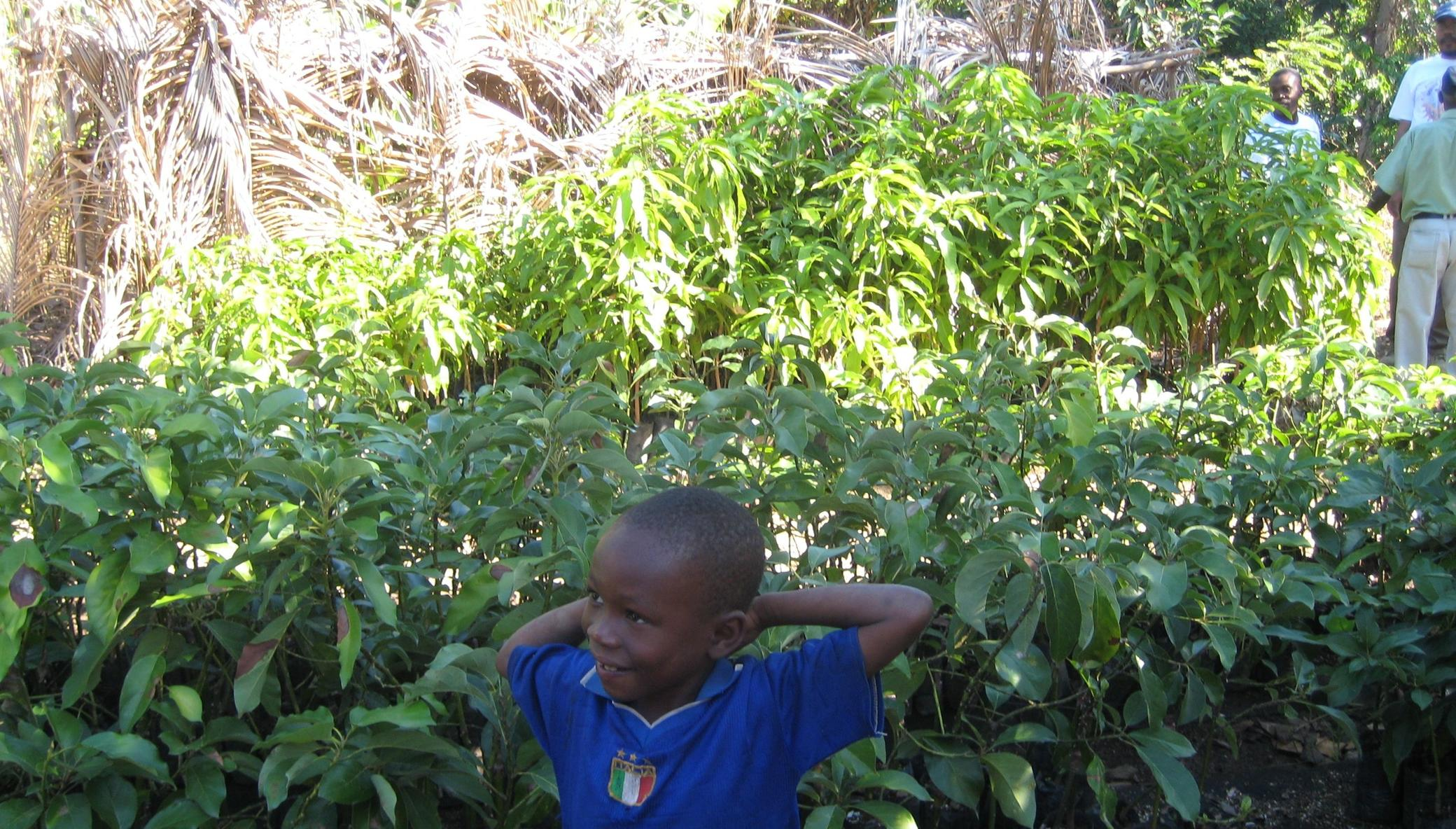 Let's Plant Trees in Haiti, Together!