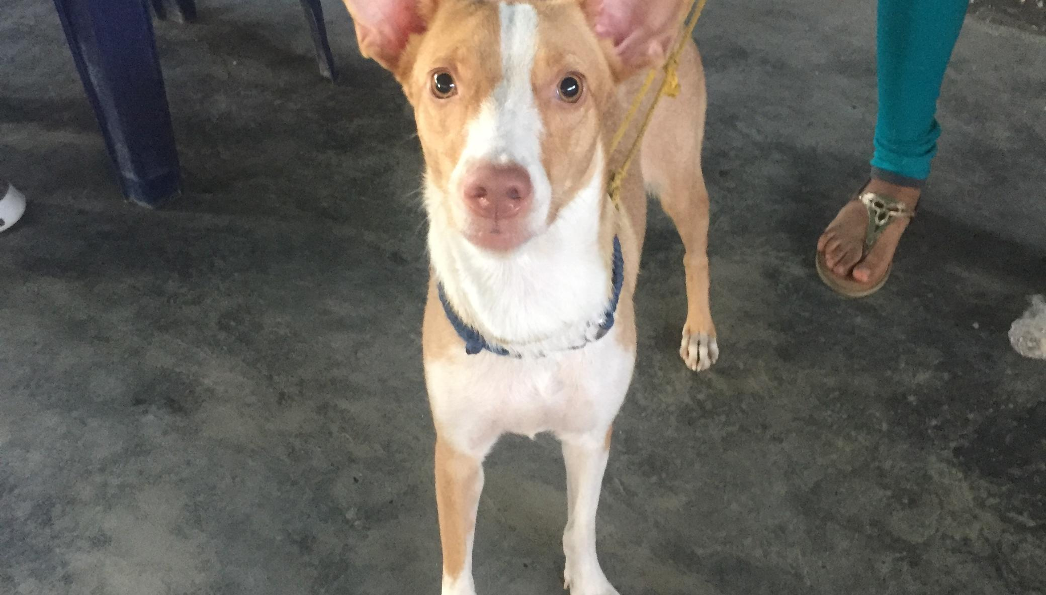 Let's vaccinate 1,000 Venezuelan dogs (rabbies)
