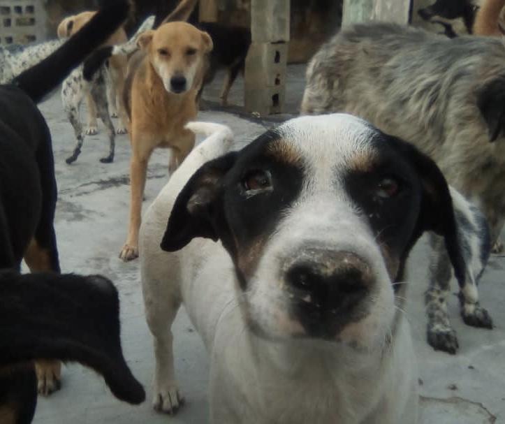 Make+200 senior rescue Venezuelan dogs feel athome