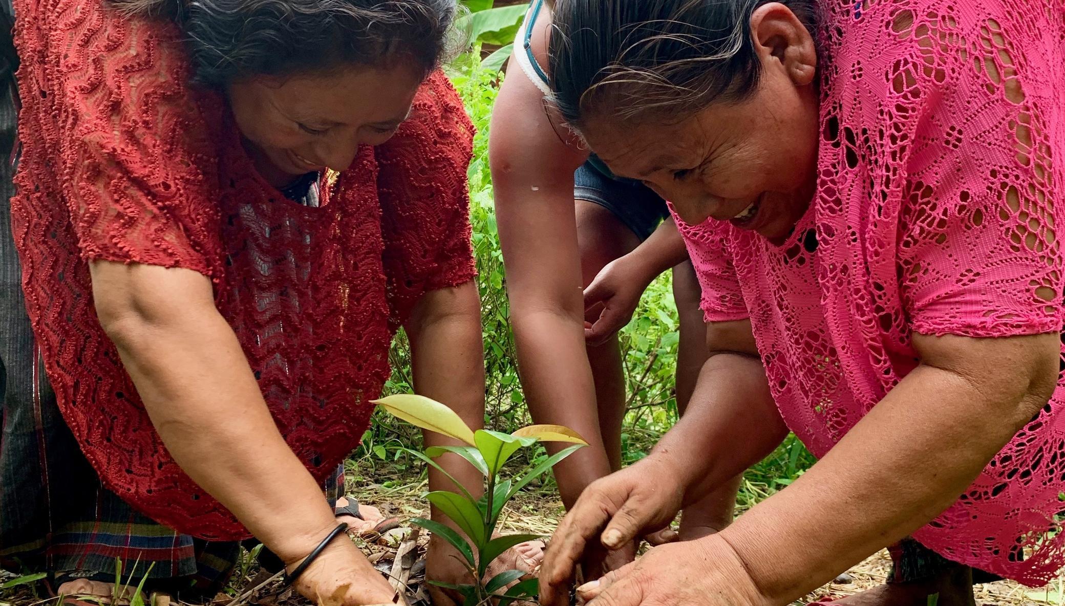 Planting Fruit Trees For Guatemalan Families Hasanah Org
