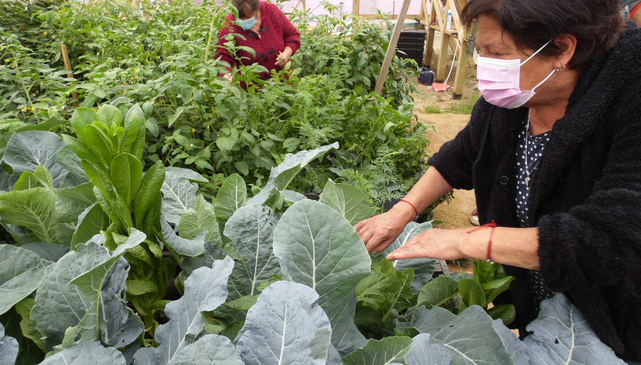 Provide sustainable greenhouses to feed families