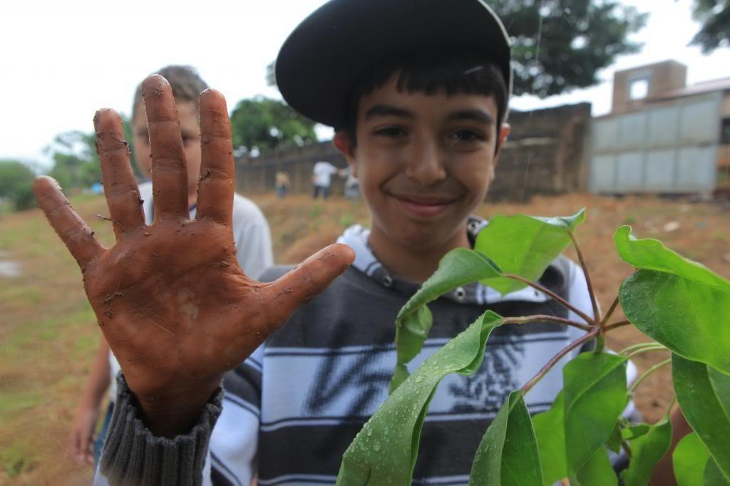 Replanting Brazil's Fruit Trees