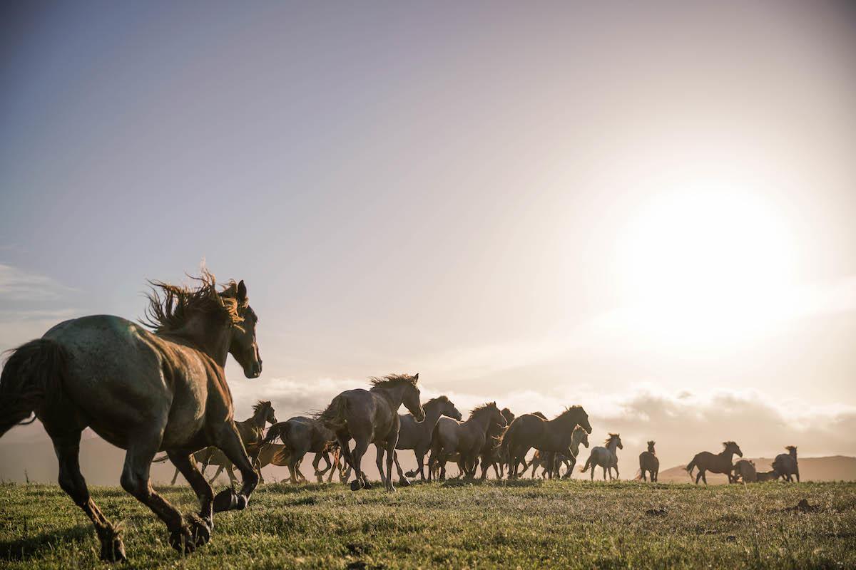 Run RTFs American Wild Horse Sanctuary for a Year