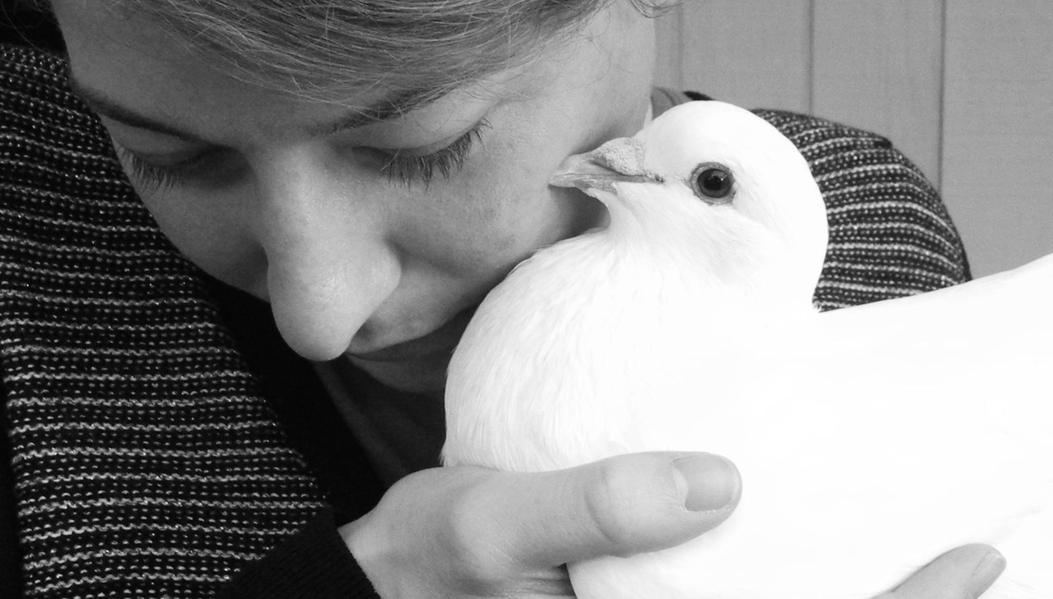 Save the Lives of Domestic Pigeons & Doves