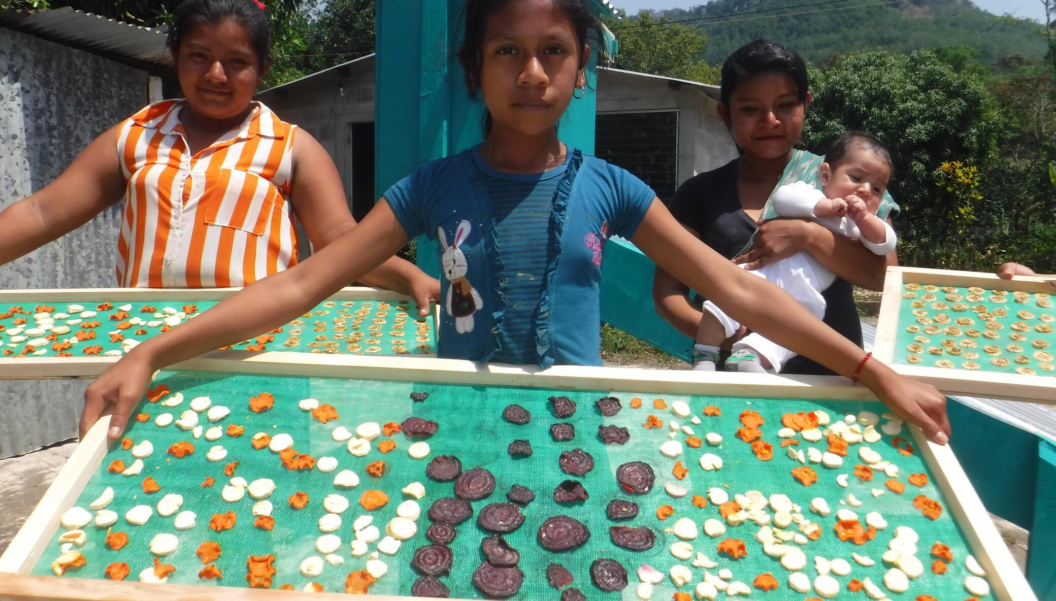 Solar Fruit Dehydrators for MicroEntrepreneurs