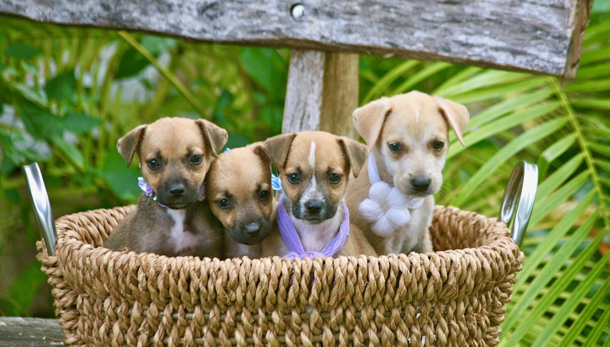 Spay/Neuter 2,000 Stray Dogs & Cats in The Bahamas