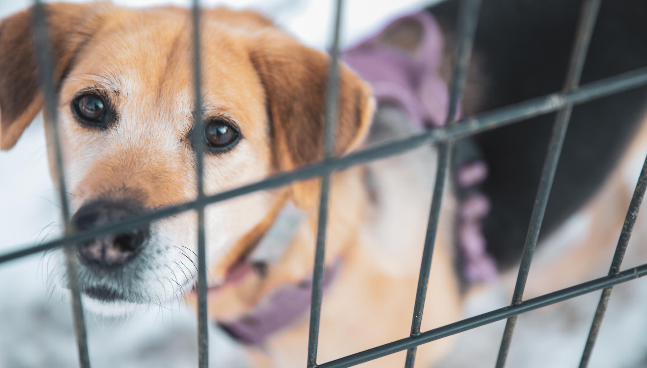 Stop The Killing of Dogs & Cats in Japan