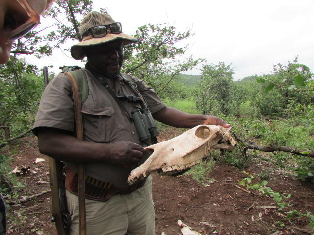 Support 340 Wildlife Rangers in Zimbabwe