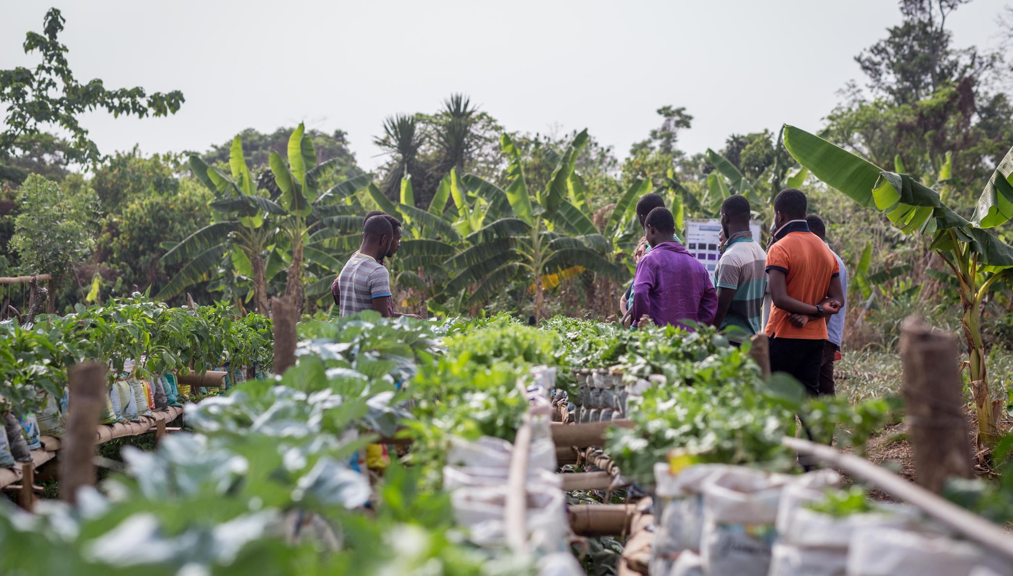 Take Best Practices to Farmers in Rural Ghana